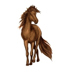 Sketch of brown horse with bay arabian stallion vector
