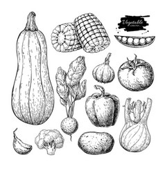 Vegetable hand drawn set isolated vector