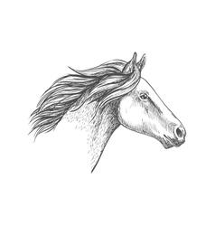 White horse pencil sketch portrait vector image vector image