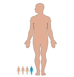 Man body vector image vector image
