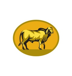 Brahman Bull Oval Retro vector