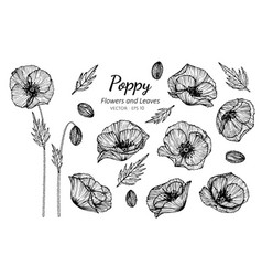 Collection set of poppy flower and leaves drawing vector