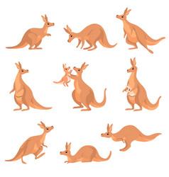 Cute brown kangaroo set wallaby australian animal vector