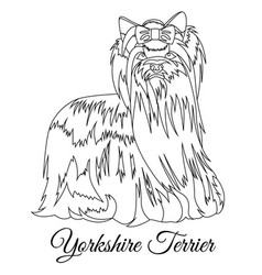 yorkshire terrier dog outline vector image vector image