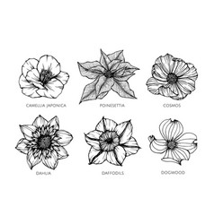 Collection set of flower drawing vector