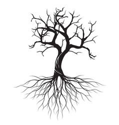 Dry olive tree with roots vector