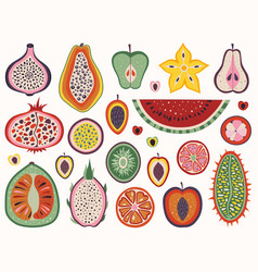 exotic and tropical and cut fruit slices vector image