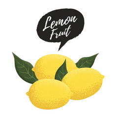 fresh lemon fruit vector image