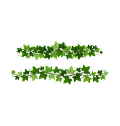 green climbing ivy creeper branches isolated on vector image
