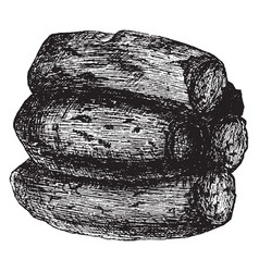 mud wasp nest vintage vector image