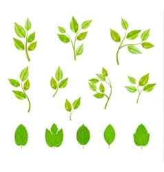 Branches With Leaves Isolated Set vector image