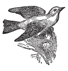 Tanager vintage vector