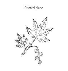 occidental plane branch vector image