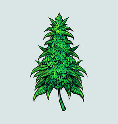 cannabis leaf plant medical vector image
