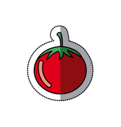 color vegetable tomato icon vector image