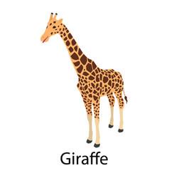 giraffe icon isometric style vector image