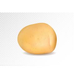 realistic potato 3d vector image