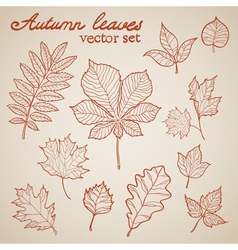 Autumn leaves colorful collection set vector image