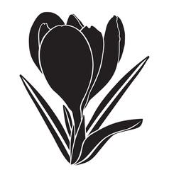Crocus silhouette vector
