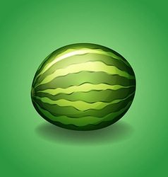 Fresh watermelon on green background vector image