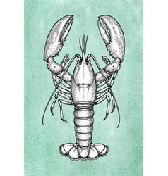 Lobster ink sketch on old paper vector