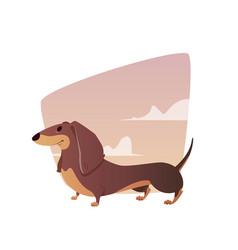 a vivid dachshund vector image