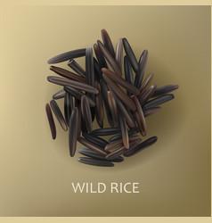 Grains of wild black rice vector