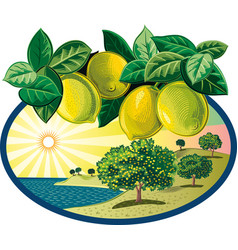 Oval frame with citrus grove vector
