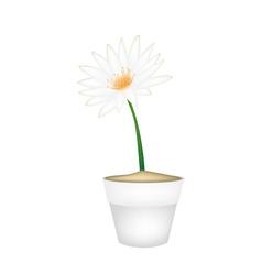 White Lotus Flower in A Ceramic Pot vector image