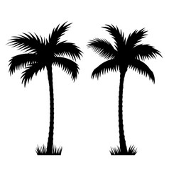 palm tree 002 vector image