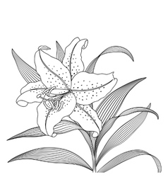 Beautiful Lily flower on a light background vector image