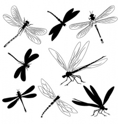 Dragonflies tattoo vector