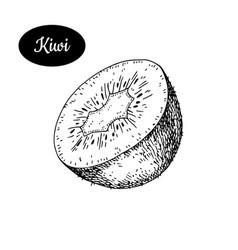 Hand drawn sketch style fresh kiwi vector