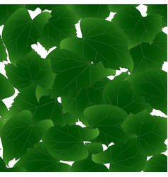 hibiscus syriacus leaves - rose of sharon on vector image