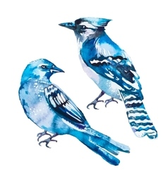 Blue jay isolated on a white background vector