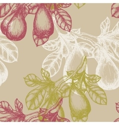Fig Fruit on the branch hand draw sketch vector image