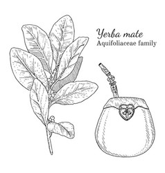 Ink yerba mate hand drawn sketch vector