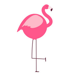 thick flamingo on white background vector image