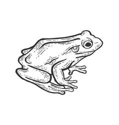 frog animal sketch engraving vector image