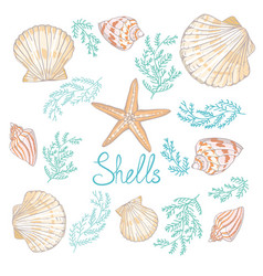 Hand drawn - collection of seashells marine set vector