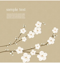Cherry blossom card vector image vector image