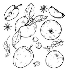 Apples whole and cut into slices berries and spic vector