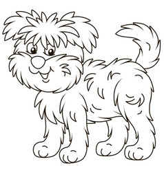funny and shaggy dog affenpincher vector image