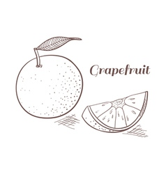 Grapefruit in engraving design vector