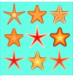 Starfish a set of nine options vector image