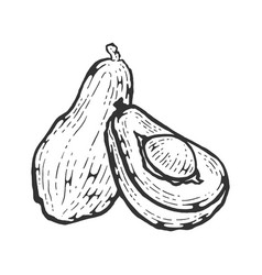 Avocado sketch engraving vector