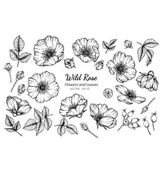 Collection set of wild rose flower and leaves vector