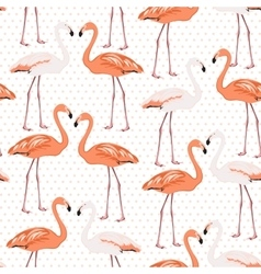 Exotic flamingo wading bird couples beak to beak vector image