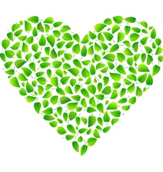 Heart made of fresh green leaves vector image