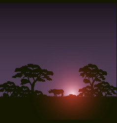 Sunset scene african landscape with silhouette vector